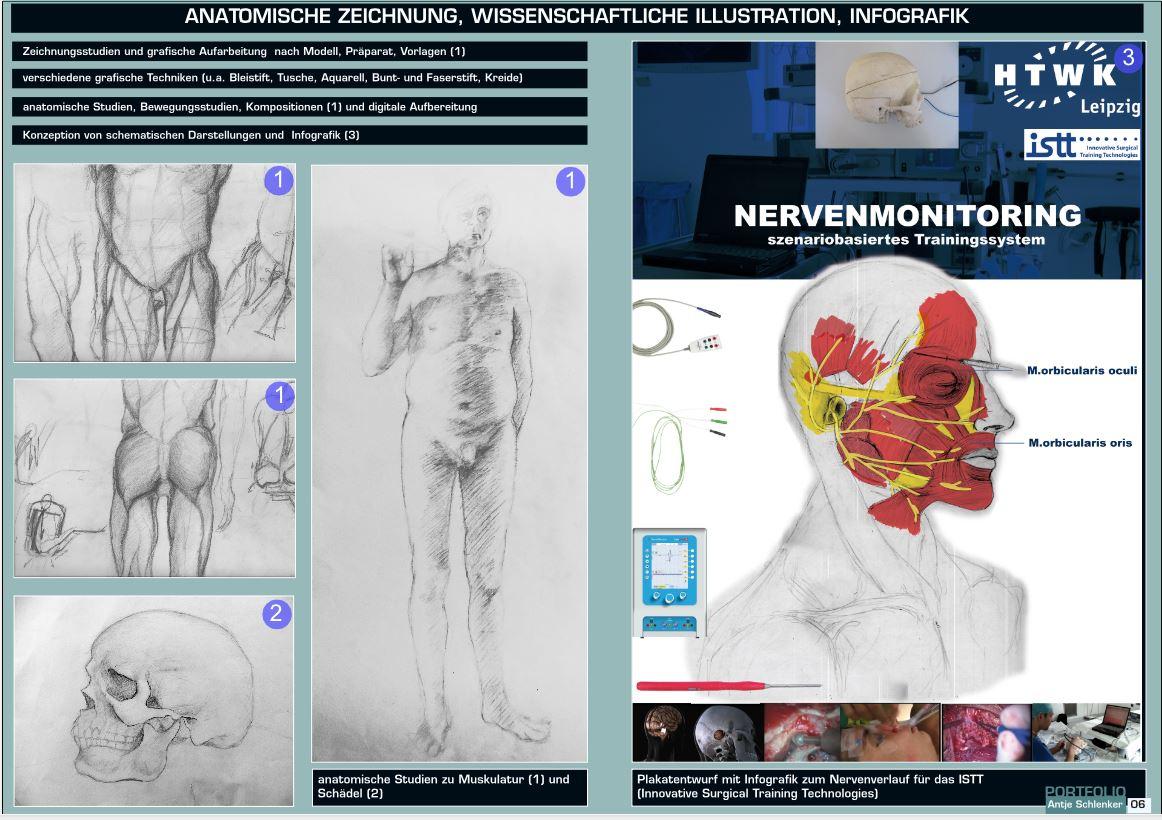 anatomische-zeichnung